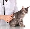 Ветеринарные клиники в Стерлибашево